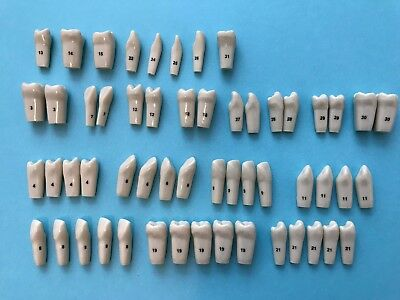 Columbia Typodont Teeth for 860 Series  - Total of 55 Teeth