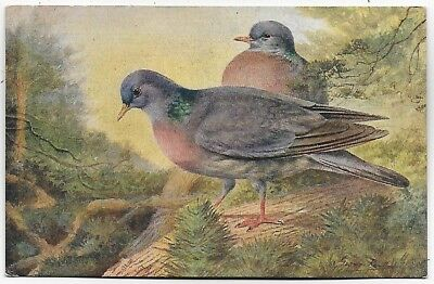 Vintage Postcard.  Bird Picture by George Rankin.   Ref:84579