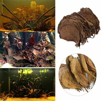 50/100/200g Catappa Leaves Almond Tree Aquarium Clean Tool Terminalia Leaf