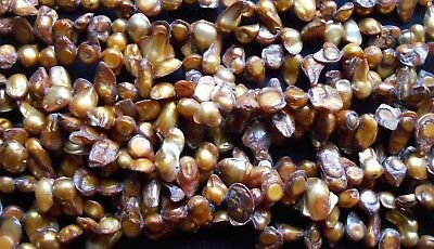 "14"" String gold freshwater blister pearls"