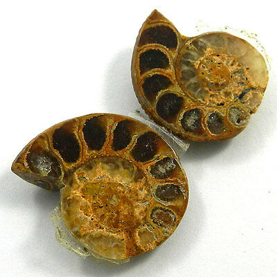 9.15 GM Nice 1 Pair NATURAL AMMONITE FOSSIL 22x27MM Loose Gemstone