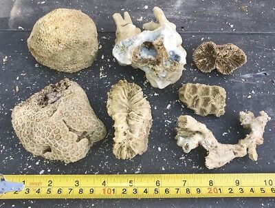 Set Of 7 Dead Coral Reef Bone Live Rock - For Marine Saltwater Fish Tank (Crb3)