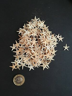 Job Lot  - Small Starfish Sea Shells- Star Fish - craft