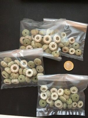 4 bags of Small sea urchin seashells