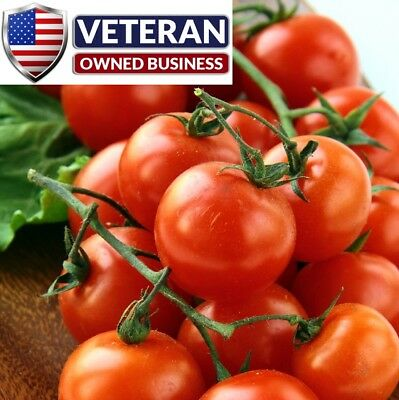 Tomato seeds 50+ Large red cherry Tomato Heirloom Vegetable Seeds