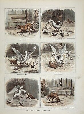 Bird Goose Gets Best of Terrier Pinscher Dog, Large 1880s Antique Color Print