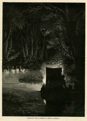 BIRD Swan Hunting at Night, LARGE Quality 1880s Print