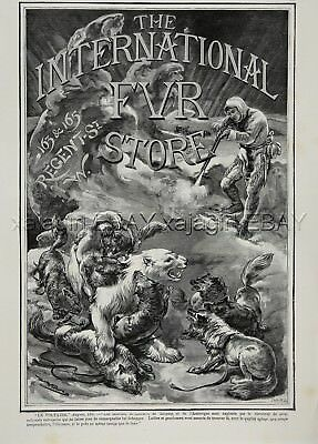 Dog Alaskan Malamutes Vs Polar Bear, Fur Store Advertisement 1880s Antique Print
