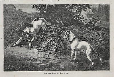 Dog English Setter & Smooth Jack Russell Terrier Hunting, 1870s Antique Print
