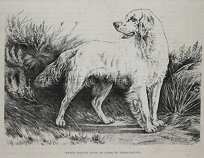 Dog English Setter (Breed Named) at Field Trials, 1880s Antique Print