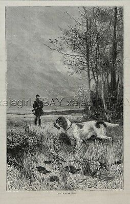 Dog English Setter Pointing a Covey of Quail, Hunter, 1880s Antique Print