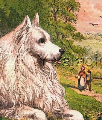 DOG German Spitz Japanese or Eskimo Dog Large Antique Chromolith 1880s Print