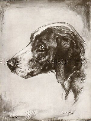 DOG Pointer English Pointer Exquisite Portrait, Beautiful 1930s Art Print