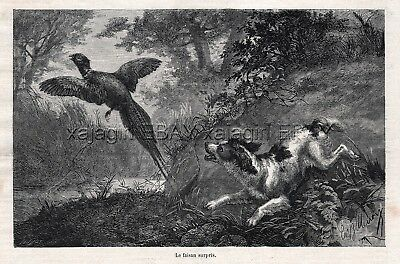 Dog Springer Spaniel Flushes Pheasant Hunting, 1870s Antique Engraving Print