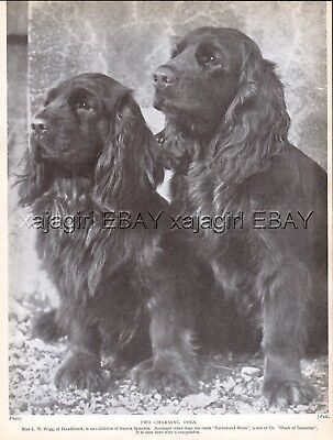 DOG Sussex Spaniel Pair (Named), Vintage Print 1930s