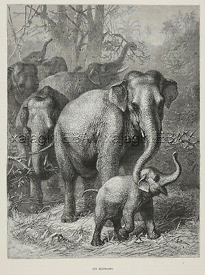 Elephant Mother Tickles her Calf Baby, Charming Large 1880s Antique Print