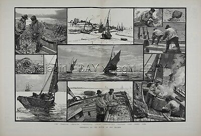 ENGLAND Thames Shrimping Commercial Fishing, Huge 1880s Antique Print & Article