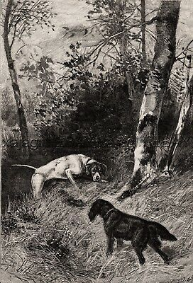 Flat Coated Retriever & Pointer Find A Rabbit, Large 1880s Antique Print