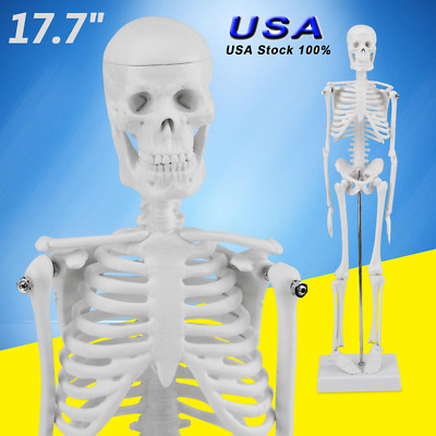 45CM Life Size Human Anatomical Anatomy Skeleton Advanced Medical Model + Stand
