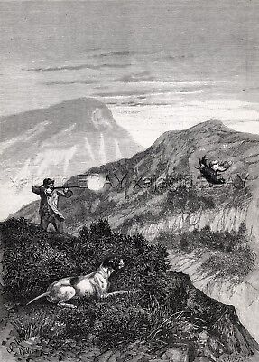 Hunting Black Grouse Pointer Dog, Firearms Good Shot Large 1880s Antique Print