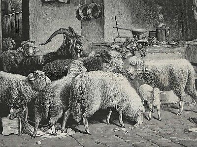 Sheep & Goats Break Into House of Farmer, Beautiful Large 1870s Antique Print
