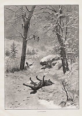 Wolf Poisoned Strychnine, Animal Cruelty, Large 1890s Antique Print & Article