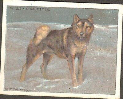 DOG Alaskan Malamute Eskimo Sled Dog, Antique 1915 Trading Card