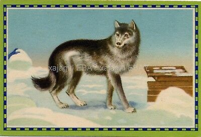 DOG American Eskimo Dog, Old German 1930s Trading Card