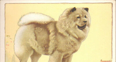 DOG Chow Chow, Named, Large Color Trading Card, 1934