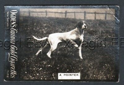 DOG English Pointer On Trail 1902  Photo Trading Card 2