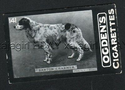 DOG English Setter (Named Champion, Intl Field Trials) Photo Trading Card, 1902