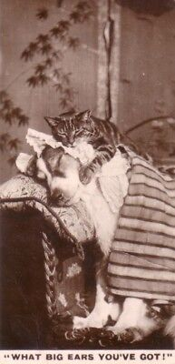 DOG Greyhound & Cat, Real Photo Trading Card, 1930s