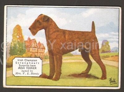 DOG Irish Terrier (Named), Antique 1930s Trading Card