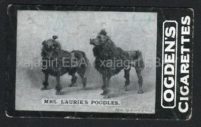 DOG Poodle Champs Pair (Named) Photo Trading Card, 1902