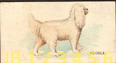DOG Poodle White, Small American Trading Card from 1890