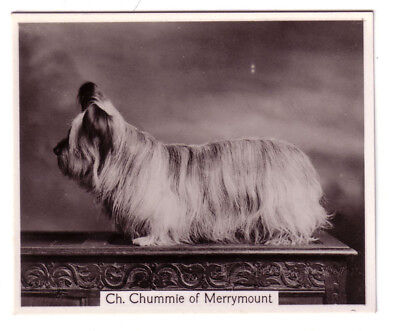 DOG Skye Terrier Named, Large Photo Trading Card, 1938