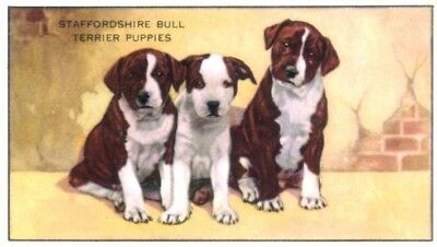 DOG Staffordshire Bull Terrier Puppy Trading Card 1930s