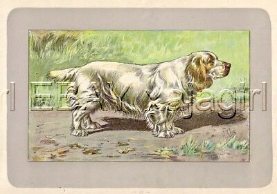 DOG Clumber Spaniel, Rare Antique 100-Year-Old French Dog Print