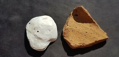 Nice Roman lot pottery shard and Oyster shell.  Please read description. L110b