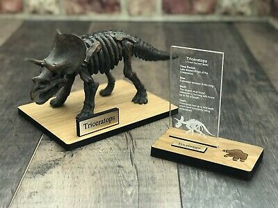 Triceratops Skeleton Resin Replica on stand with banner
