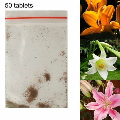 Mixed Colors Lily Seeds Indoor Bonsai Perfume Lily Seeds Lily Flower Seeds GA