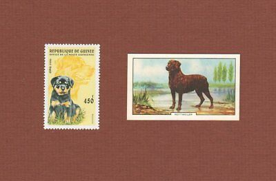 Rottweiler dog postage stamp and card set of 2