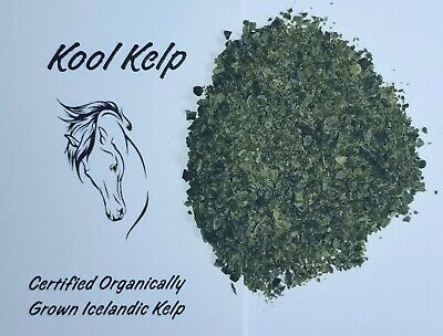 Organic Icelandic Kelp for horses, dogs, cats. Human grade
