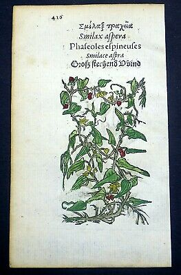 1551 Leonhard FUCHS 2 Woodcuts SMILAX / SCABIOUS in fin ORIGINAL hand colour