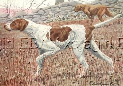 DOG English Pointer, Bird Hunting Dog, 85+ Yr Old Print