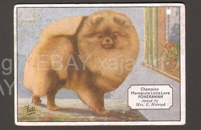 DOG Pomeranian (Named), Antique 1930s Trading Card Collector Card
