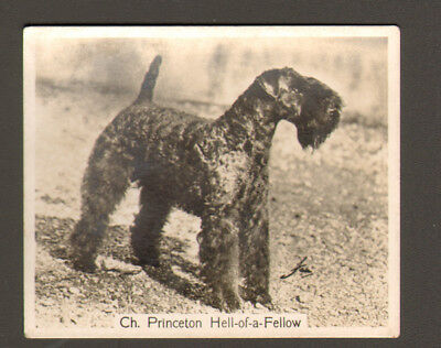 DOG Kerry Blue Terrier Champ, 1938 Photo Trading Card 2