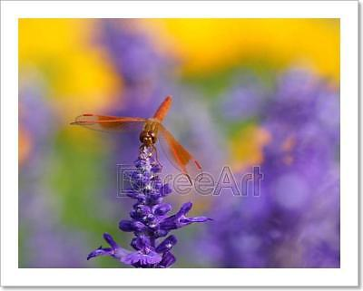 Dragonfly Is Resting On The Lavender Art Print Home Decor Wall Art Poster - E