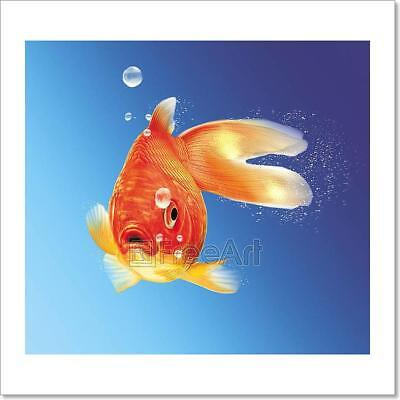 Gold Fish Facing The Viewer, With Some Art Print Home Decor Wall Art Poster - E