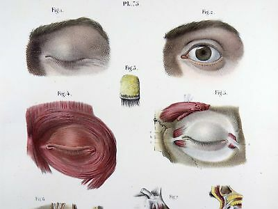 1853 Hirschfeld ANATOMY OPTICS handcolor MASTERPIECE MEDICAL ILLUSTRATION